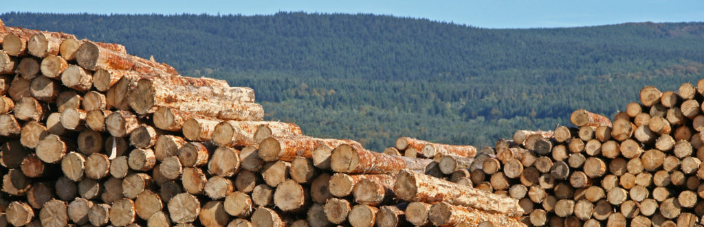 economie filiere bois transition énergétique