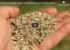 les semences locales capture écran